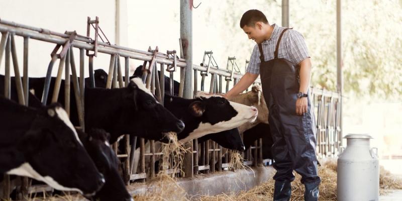 Stres cieplny u krów – cz.1. Lekceważony problem